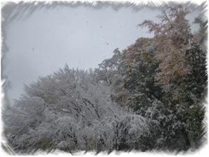 20121028-220558.jpg